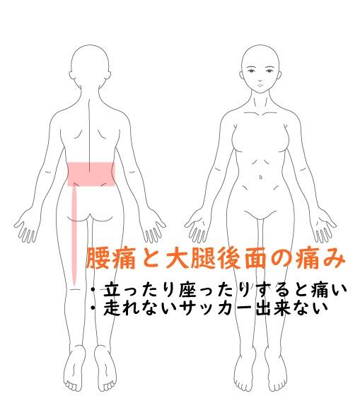 腰痛とハムスターの痛み